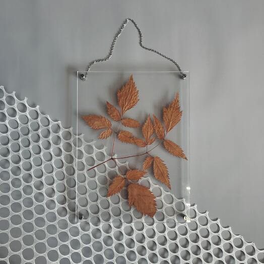 воздушный гербарий