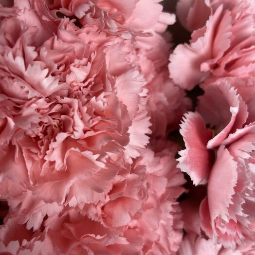 """Букет """"Пинки"""" из 15 розовых гвоздик"""