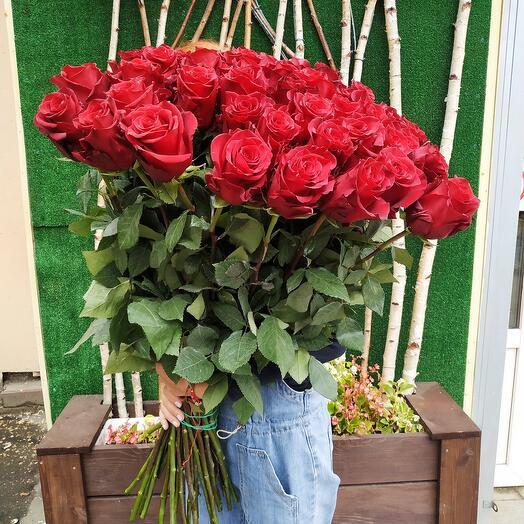 Роза Эксплорер (80 см)