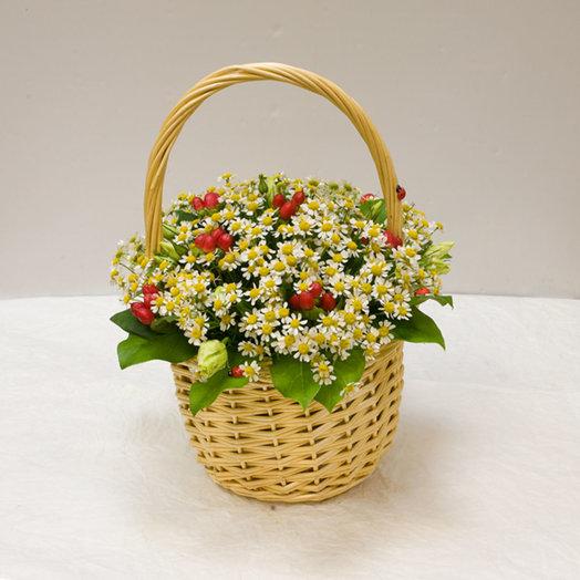 Корзинка ромашек Садовая ромашка: букеты цветов на заказ Flowwow