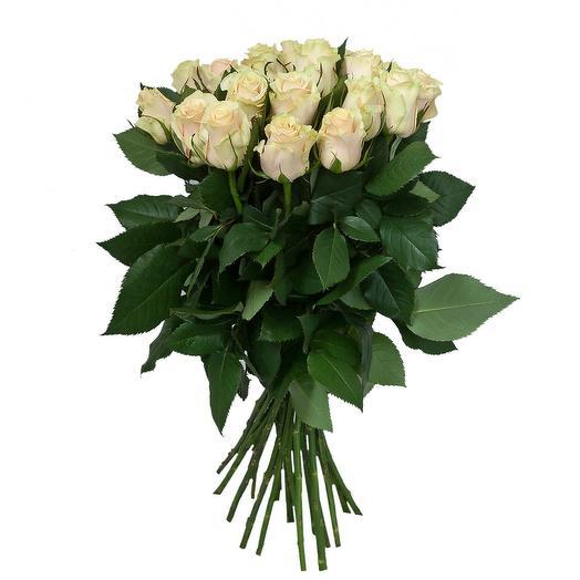 Роза талея 60 см, 21 шт