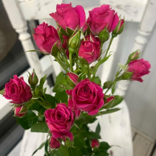 Кустовая роза «розовая»