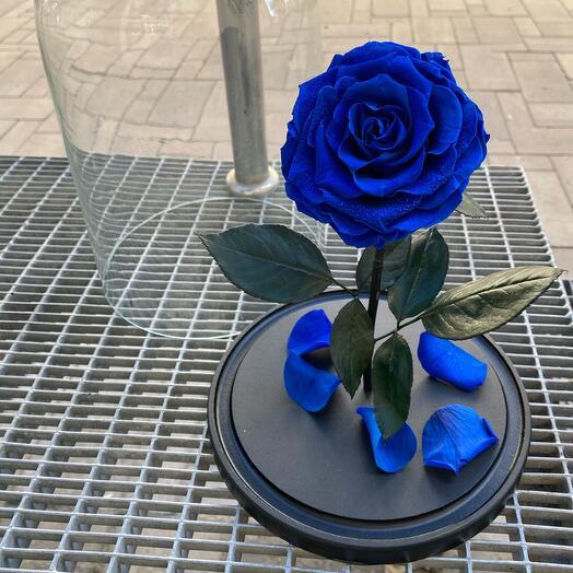 Роза в колбе King size