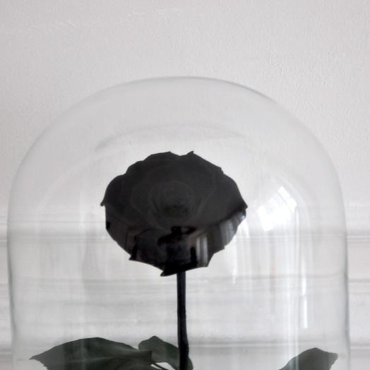 BLACK STAR ЧЕРНАЯ РОЗА В КОЛБЕ KING SIZE: букеты цветов на заказ Flowwow