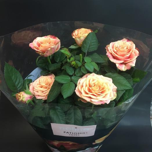 Роза в горшке Patio: букеты цветов на заказ Flowwow