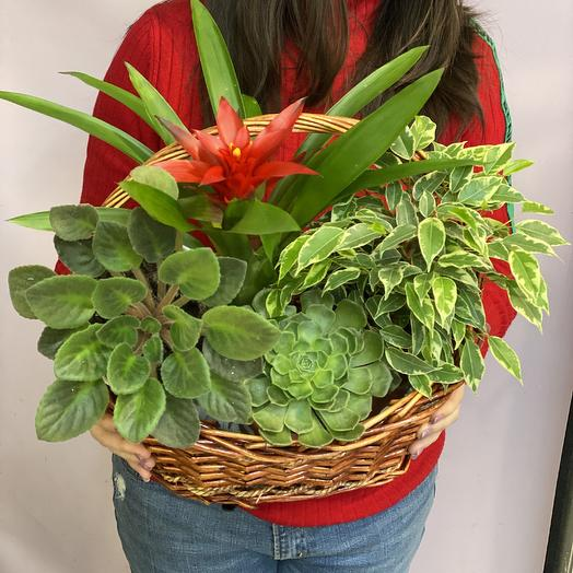 Зимний сад: букеты цветов на заказ Flowwow