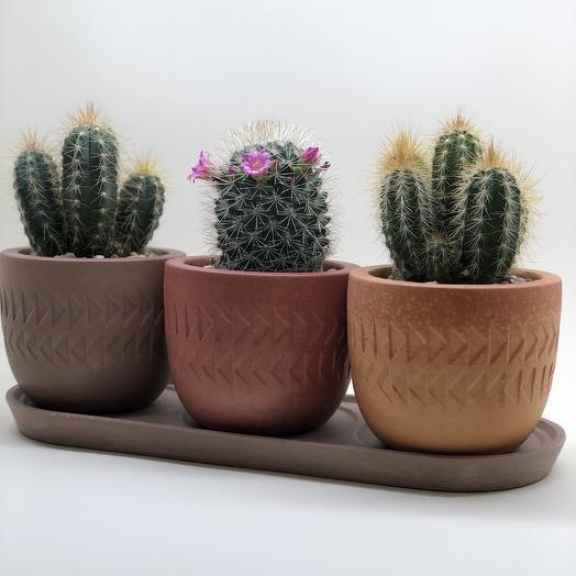 Цветущая Мексика: букеты цветов на заказ Flowwow