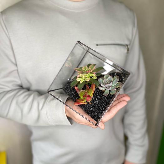 Флорариум куб