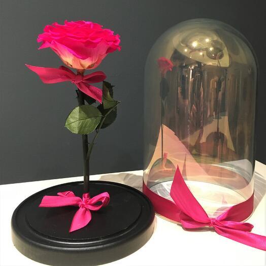 Роза фуксия в колбе (бутон до 12 см)