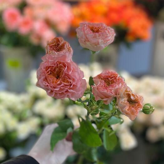 Пионовидная Роза 🌹🥰 50 см