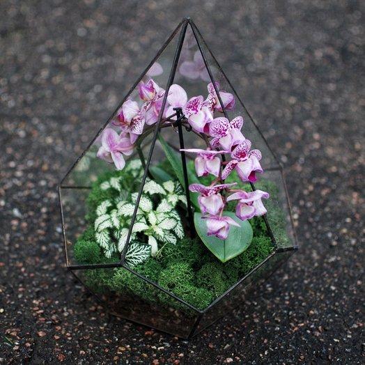 Орхидариум 4: букеты цветов на заказ Flowwow