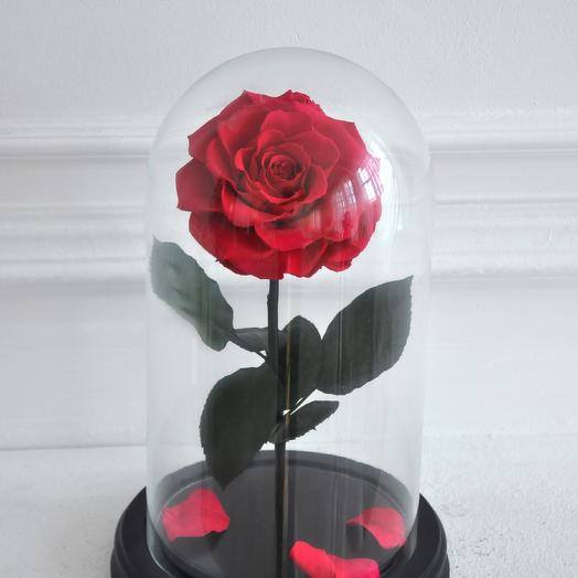 RUSSIAN RED, КРАСНАЯ РОЗА В КОЛБЕ PREMIUM: букеты цветов на заказ Flowwow