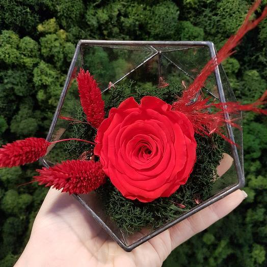 Флорариум с стабилизированной розой