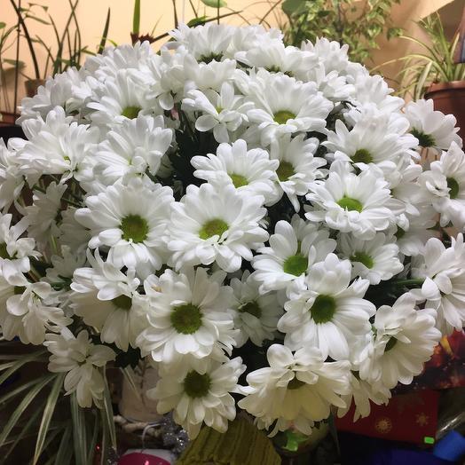 Букет хризантемы  «Бакарди 7»