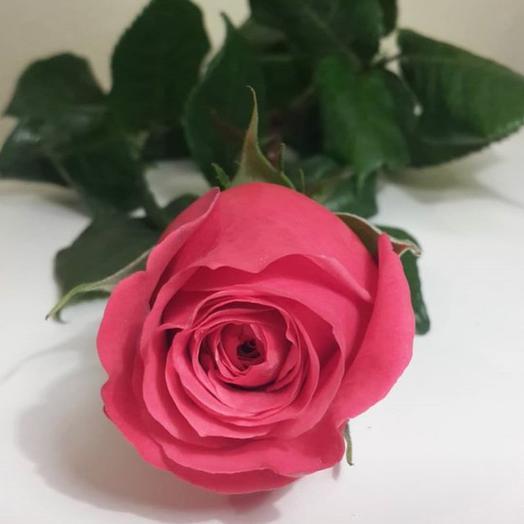 Роза темно розовая 50см