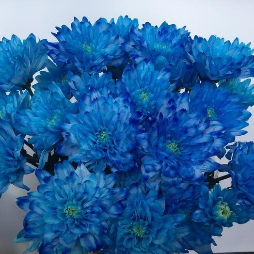 Букет синей хризантемы
