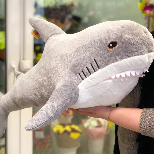 Акула серая