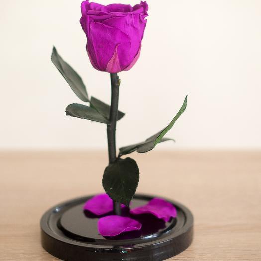 Роза в колбе Мини Плюс тёмная фуксия: букеты цветов на заказ Flowwow