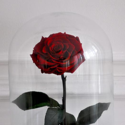 BURGUNDI WINE, БОРДОВАЯ РОЗА В КОЛБЕ KING SIZE: букеты цветов на заказ Flowwow