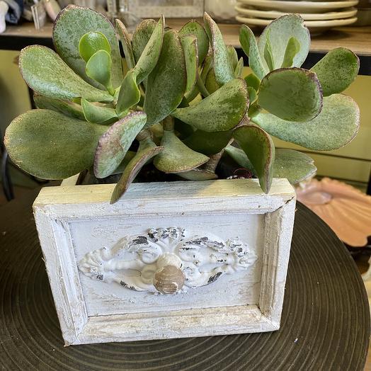 Растение в деревянном ящике: букеты цветов на заказ Flowwow
