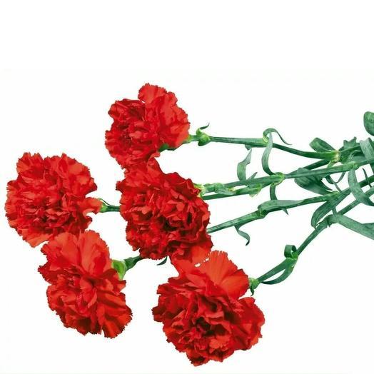 5 гвоздик: букеты цветов на заказ Flowwow
