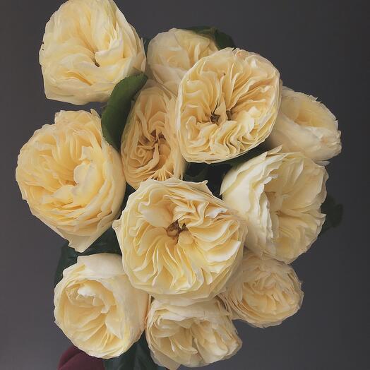 Моно из розы Вувузела