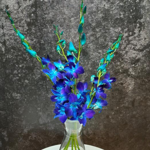 5 Орхидеи в колбе