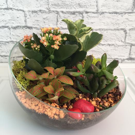 Флорариум «Апельсинка» ваза косой срез: букеты цветов на заказ Flowwow