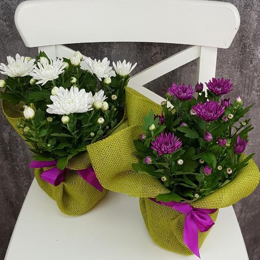 Подружки: букеты цветов на заказ Flowwow