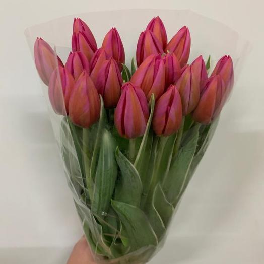 Темно- розовый тюльпан: букеты цветов на заказ Flowwow