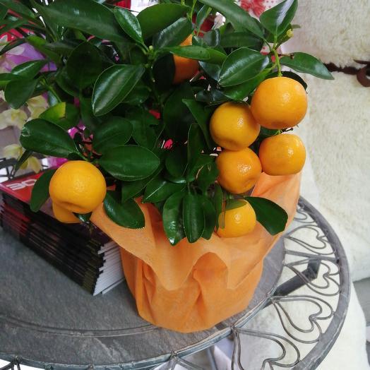 Цитрусовое дерево: букеты цветов на заказ Flowwow