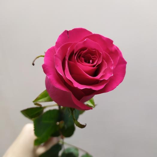 Ароматная Роза эквадор 60 см