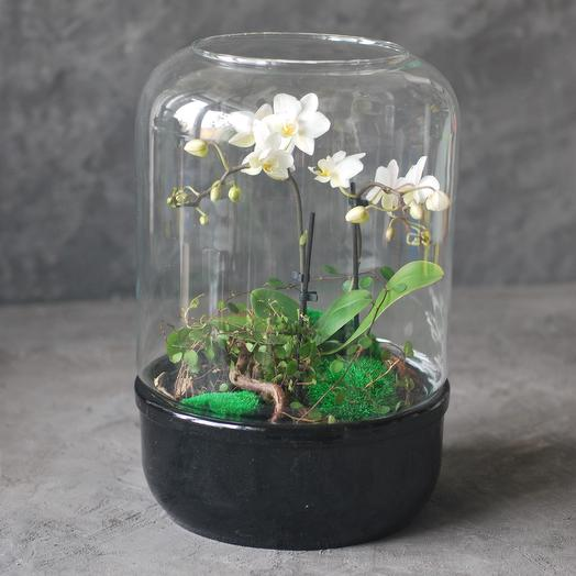 Флорариум с мини-орхидеей и кочками мха