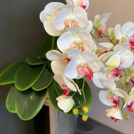 Листья фаленопсиса интерьерные искусственные 1 куст