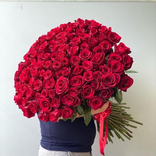 101 роза красная роза 🌹