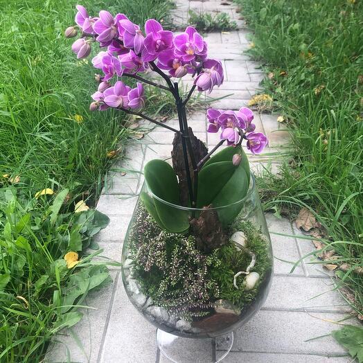 Орхидея в бокале «Лесная нимфа»