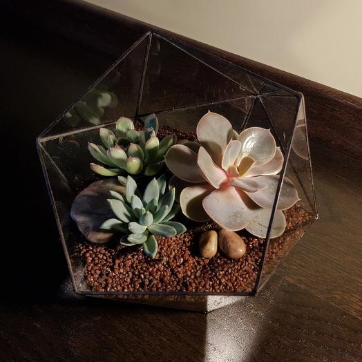 "Флорариум ""Нежность"": букеты цветов на заказ Flowwow"
