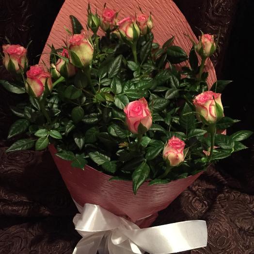 Роза горшечная + киндер: букеты цветов на заказ Flowwow
