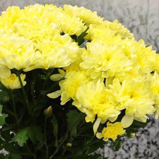 Букет из хризантымы