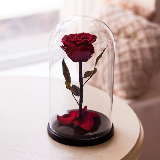 Роза в колбе «King» бордовая