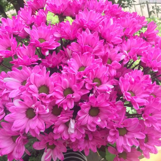 Хризантема кустовая 9 шт