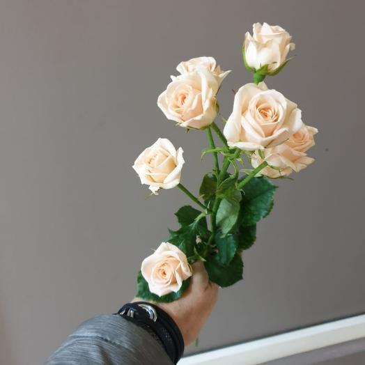Кустовая розы кремовая