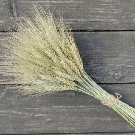 Букет из пшеницы в 51 колос