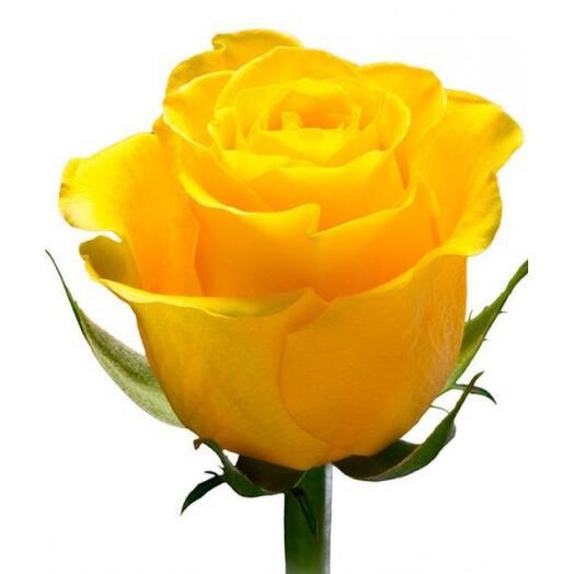 Желтая роза 60 см