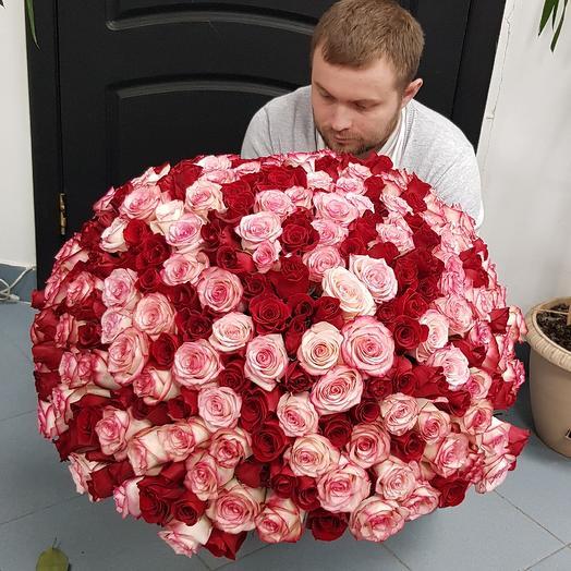 251 роза