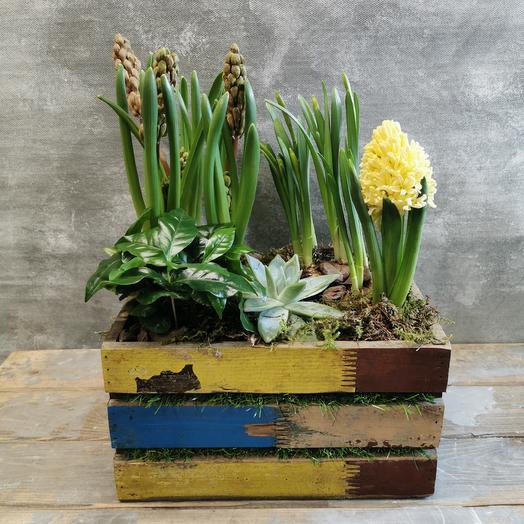Кофейное дерево с гиацинтами в деревянном ящике: букеты цветов на заказ Flowwow