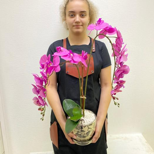 Двойная орхидея Фуксия