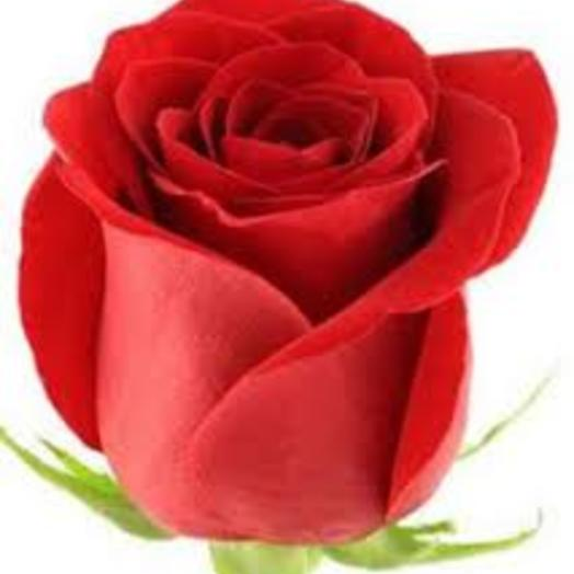 Роза премиум класса Фридем Эквадор