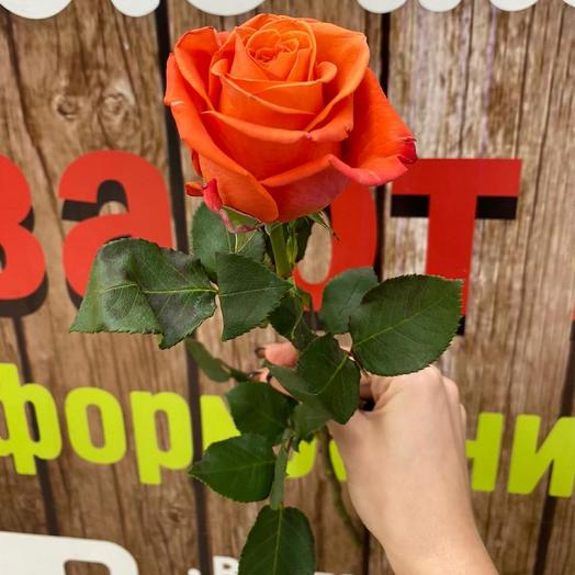 Роза Эквадор 42 см