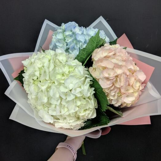 Bouquet of hydrangeas